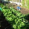 伸び伸び元気な畑の野菜