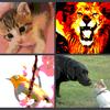 Photoshop要らず! 無料グラフィックソフトGIMPで動物を可愛くレタッチ