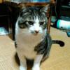 我が家の猫さんに怒られる夢と猫小説
