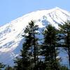 河口湖「創造の森」付近からの富士山と「フジプレミアムリゾート」上空を飛ぶイワツバメなど