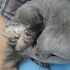 ボサノヴァとさざ波と丸刈り猫