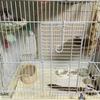 スズメとキッチンペーパー 動物病院のアドバイス3
