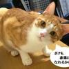 番犬ならぬ番猫がいるらしい【猫との暮らし】我家の猫はお留守番猫