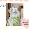 猫ちゃんのお写真紹介.第14弾