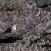 2019年3月23日などの鳥撮り-埼玉の都市公園など