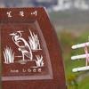 🦜野鳥の回【6】桂川のコサギ・ハクセキレイ