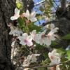 白き桜、奇跡の純白。 ~2021年 桜花賞 回顧