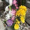 お墓参りに、頂いたびわと、母から貰った苗の紫陽花咲いたので持って行きました。