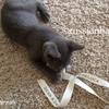 【子猫との過ごし方】お世話にかかるお金のお話②ー猫を飼うために必要なもの、揃えたいもの、買いたいものー