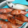 缶詰の使い方&釣り魚はあっさりと煮て