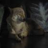 天王寺動物園 ドール