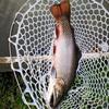 釣りに関する記事を書くのはむずかしい①開成フォレストスプリング