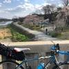 春の京都 2019 の4