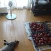 ネコたちの健康報告