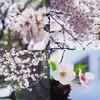 日記雑記(4/8〜4/14)
