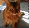 トトとチー 漢の戦い! ~ 炸裂する猫パンチ ~