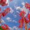 秋が来て、心のスイッチを切り替えて――前回のお題「小さい秋、見つけた」ふりかえり