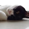 今日の黒猫モモ&白黒猫ナナの動画ー1001