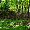 近所を散歩して新緑を楽しむ April 2020