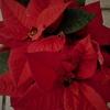 元気は神様からのプレゼント! メリー・クリスマス 💛