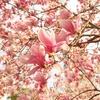 桜木町にて