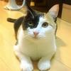 【208日目】フリスビー猫ラム