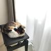 #5 保護猫がうちに来て、1か月が経ちました