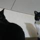 今日の黒猫モモ&白黒猫ナナの動画ー734