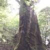 念願の世界自然遺産の島、屋久島でした。