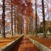 鶴見緑地公園のメタセコイア並木通り