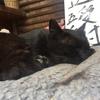 愛宕山に登るついでにネコを見るのか。ネコを見るついでに愛宕山に登るのか。それが問題だ。