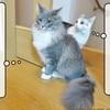猫雑記 ~むく7ヶ月の体重測定~