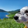 ❝天空の湖 野反湖❞   愛犬とおでかけ-群馬県観光🎵  2021年7月17日⑩