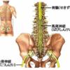 馬尾症候群の診断精度