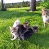【初心者向け】猫のワクチン・避妊手術解説