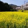 菜の花の美しい場所