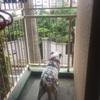 高齢犬おデブ問題