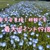 【楽天限定】ポイ活民必見♪<ポイント最大19倍>のチャンス!!