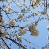 我が家の春