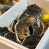 ふるさと納税 岩牡蠣