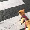 信号を守る犬