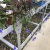 小石川植物園32