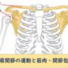 肩関節の運動と筋肉・関節包