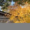 高野山の紅葉 Ⅰ