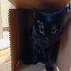今日の黒猫モモ&白黒猫ナナの動画ー981