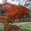紅葉狩り:友達に教えてもらいながら写真撮影の練習。