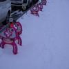 今回の雪は、じわじわ積りました