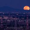 月の出を撮る 月齢15日を過ぎた満月かな・・・