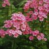8月5日花と花言葉・歌句