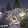 極楽橋の向こうの枝垂れ桜を愛でる夜@2021